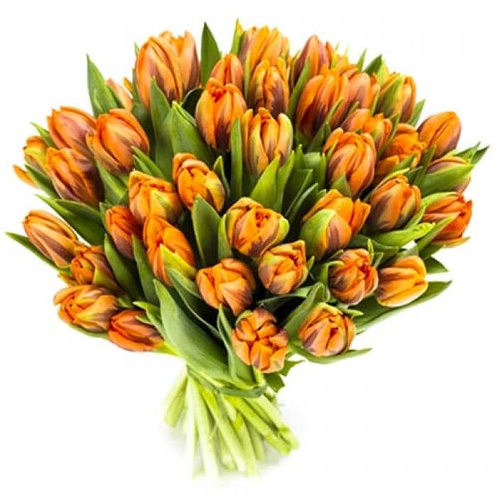 Акция!!! 51 рыжых тюльпанов