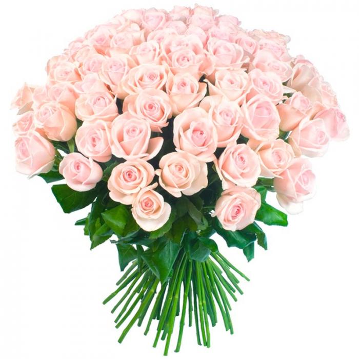 Букет из 51 нежно-розовых голландских роз