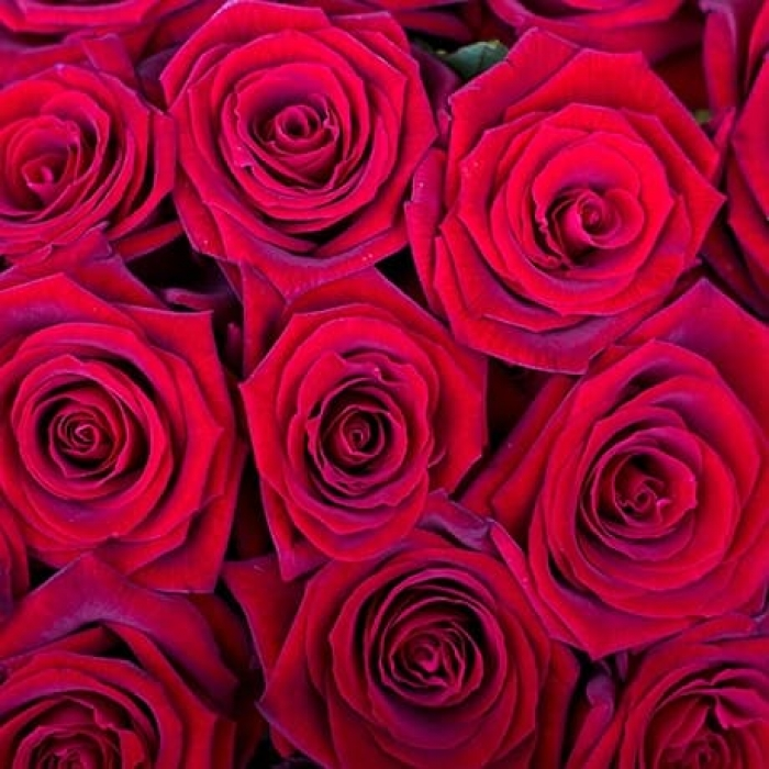 Красная Роза 90-100 см (Голландия)