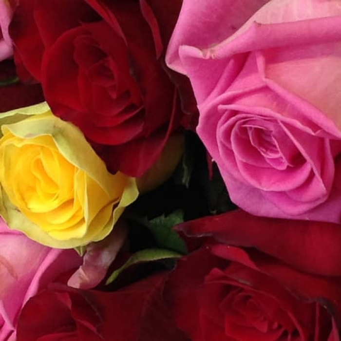 Букет из 11 цветных роз
