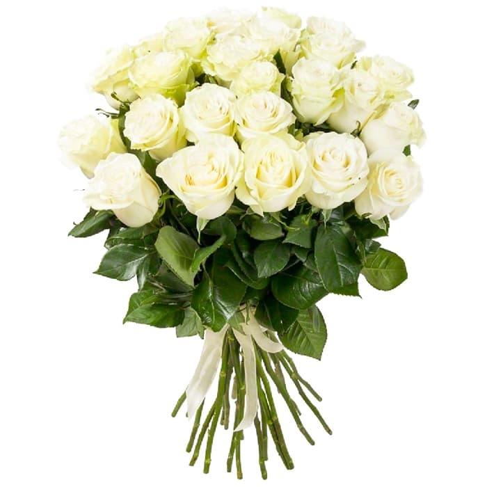Акция! 25 белых роз  + Подарки и бонусы!