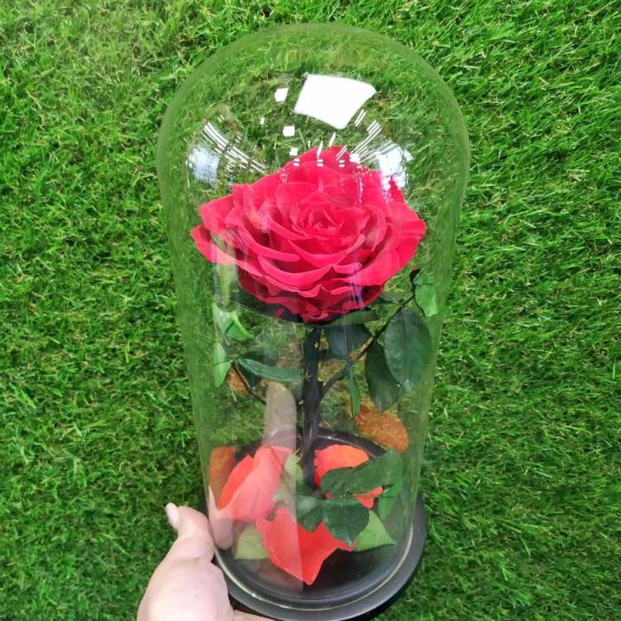 Стабилизированная роза в колбе 25 см