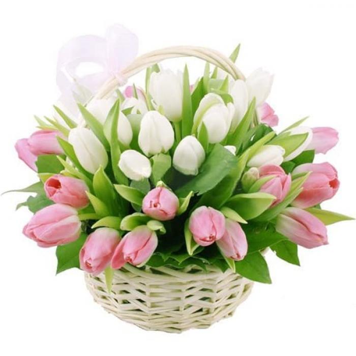 Корзинка из 31 нежного тюльпана