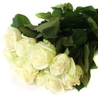 11 белых роз Классика