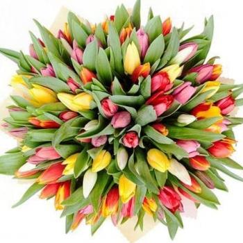 Акция!!! 51 тюльпан