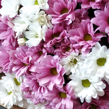 Букет из хризантем Эйфория