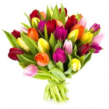 25 цветных тюльпанов + подарок!