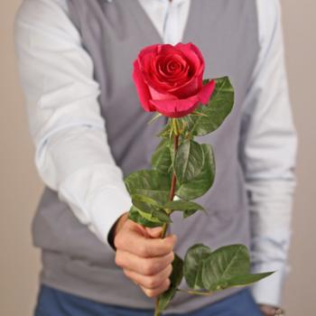 Роза Пинк Флойд 80-90 см (Голландия)